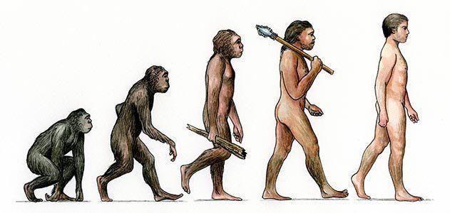 Види адаптації у людей і тварин