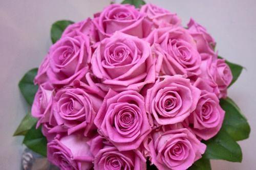 аква сорт троянди