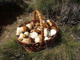 харчова цінність білих грибів