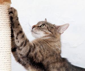 когтеточки для кішок фото