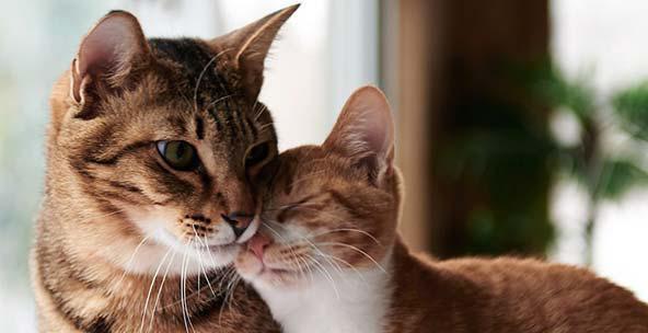 фоспасім для кішок інструкція із застосування