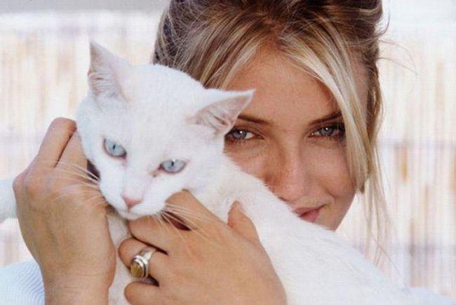 фоспасім для кішок рекомендації