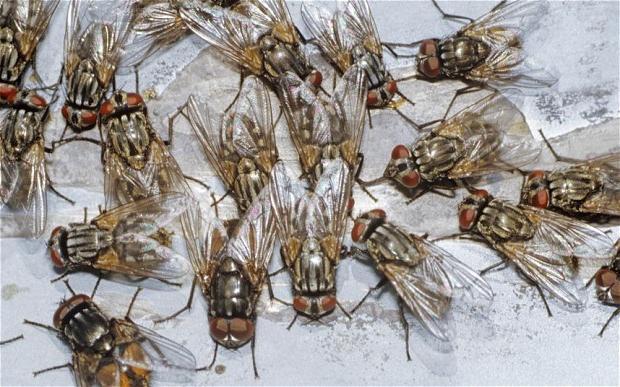до чого сняться мухи