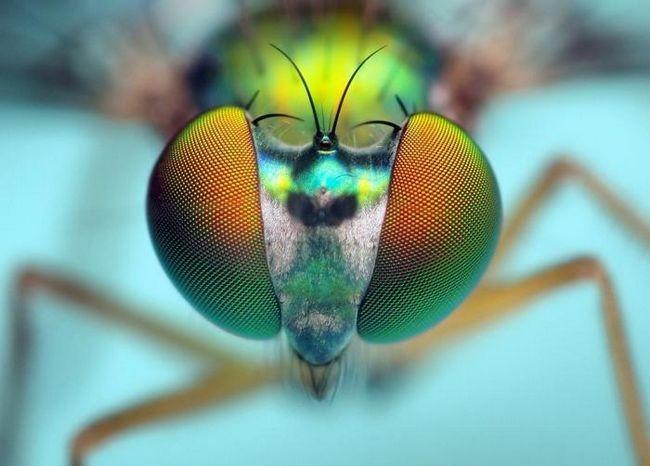 мухи сняться