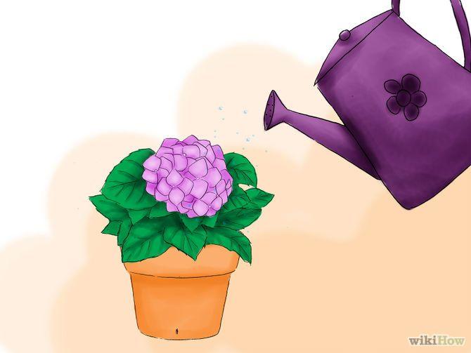 Зображення з назвою Plant Hydrangeas Step 10