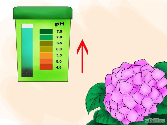 Зображення з назвою Plant Hydrangeas Step 14