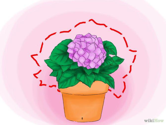 Зображення з назвою Plant Hydrangeas Step 04
