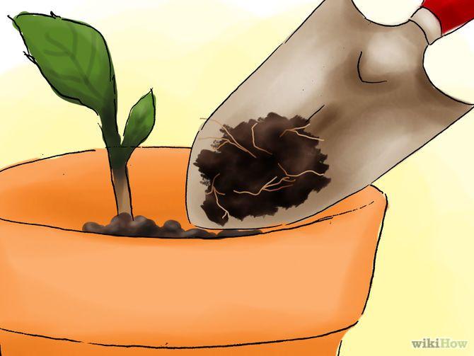 Зображення з назвою Plant Hydrangeas Step 07