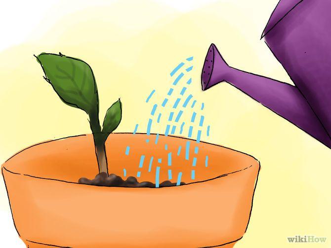 Зображення з назвою Plant Hydrangeas Step 08