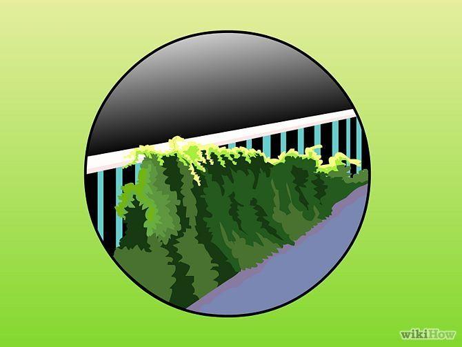 Зображення з назвою Plant Ivy Step 8