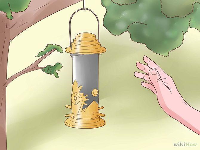 Зображення з назвою Attract Yellow Finches Step 6