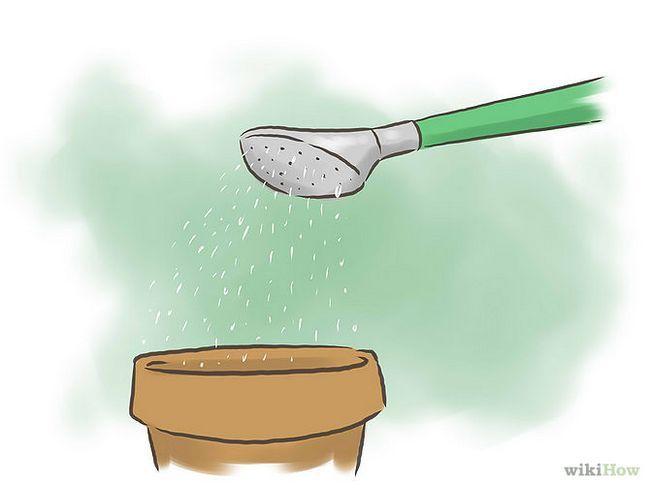 Зображення з назвою Germinate Pomegranate Seeds Step 5