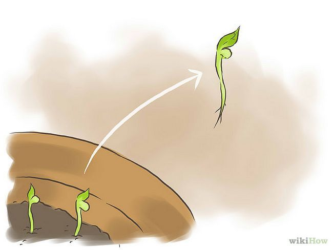 Зображення з назвою Germinate Pomegranate Seeds Step 8