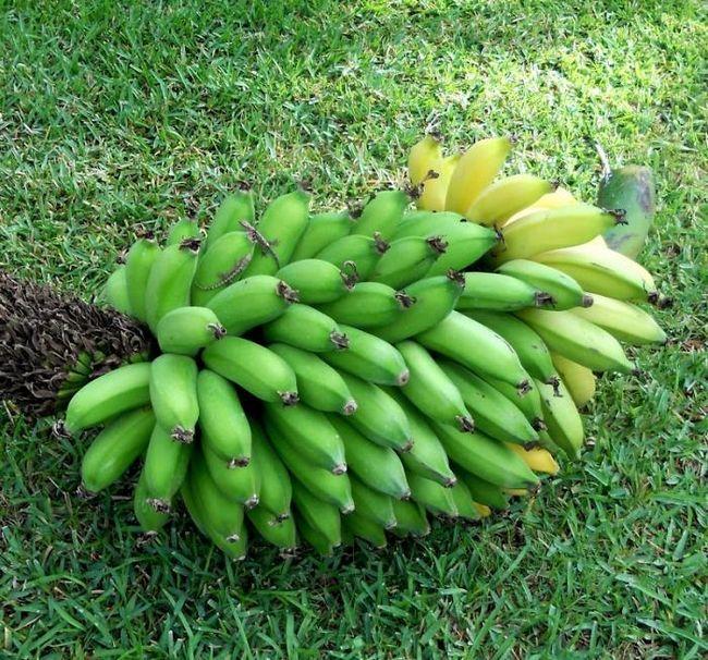 Як росте банан, або ідея для бізнесу