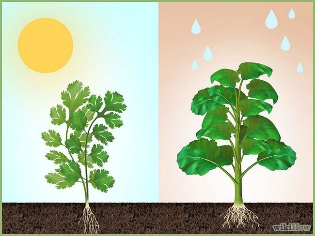 Зображення з назвою Plant a Seed Step 1