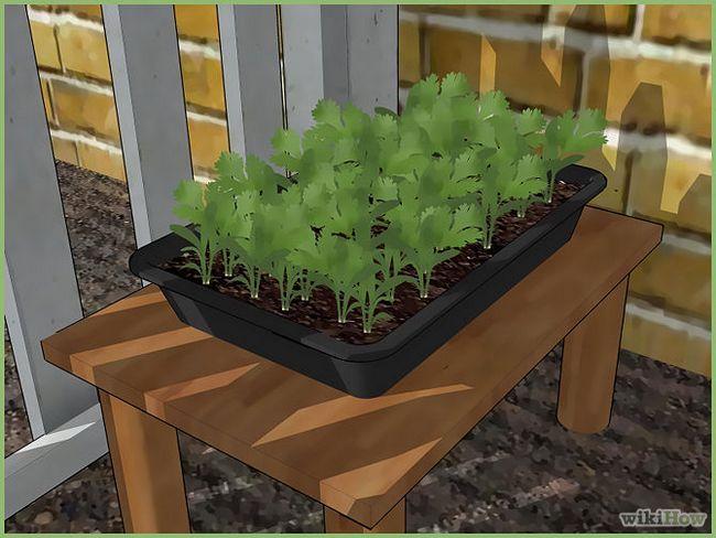 Зображення з назвою Plant a Seed Step 10