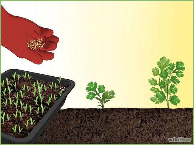 Зображення з назвою Plant a Seed Intro