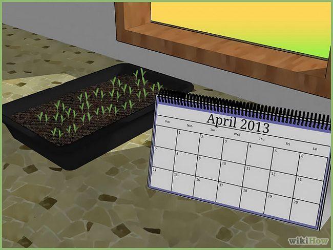 Зображення з назвою Plant a Seed Step 2