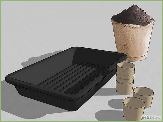 Зображення з назвою Plant a Seed Step 3