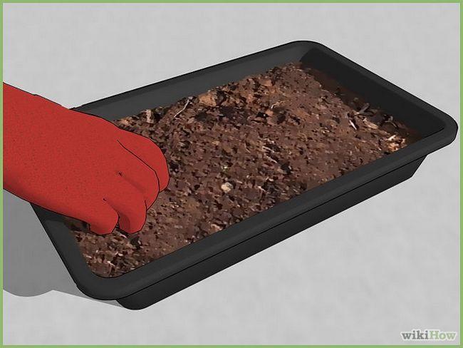 Зображення з назвою Plant a Seed Step 4