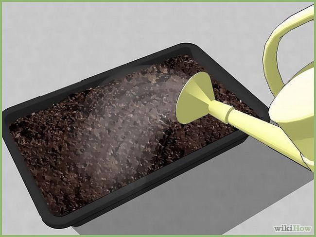 Зображення з назвою Plant a Seed Step 6