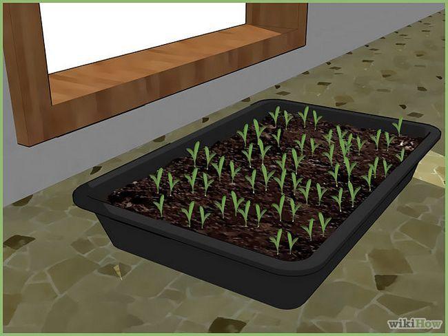 Зображення з назвою Plant a Seed Step 7
