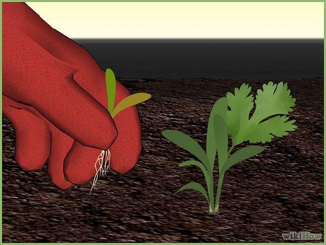 Зображення з назвою Plant a Seed Step 8