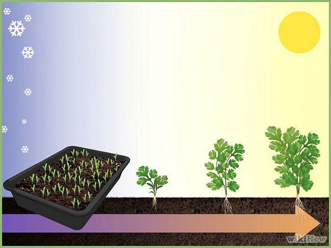 Зображення з назвою Plant a Seed Step 9