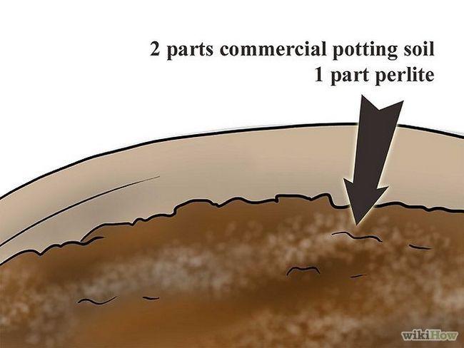 Зображення з назвою Plant Plumeria Seeds Step 2Bullet1