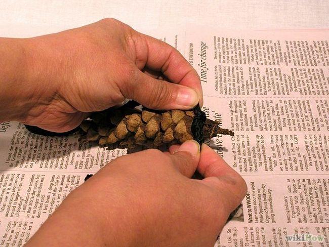 Зображення з назвою Make Peanut Butter Pine Cones for Birds Step 3