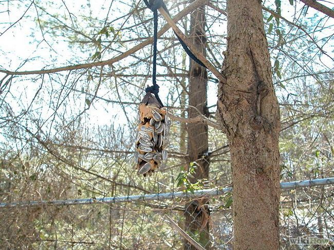 Зображення з назвою Make Peanut Butter Pine Cones for Birds Step 8