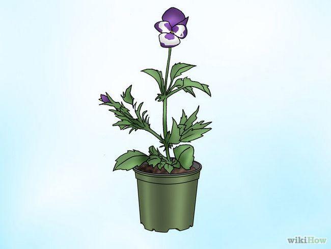 Зображення з назвою Make Pansies Bloom Again Step 1