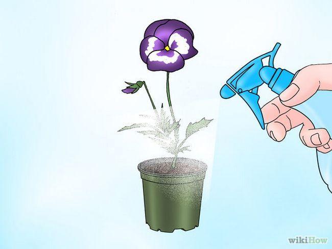 Зображення з назвою Make Pansies Bloom Again Step 3