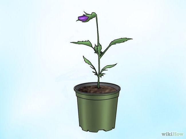 Зображення з назвою Make Pansies Bloom Again Step 6