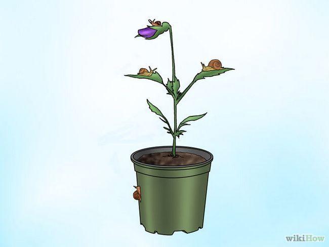 Зображення з назвою Make Pansies Bloom Again Step 8
