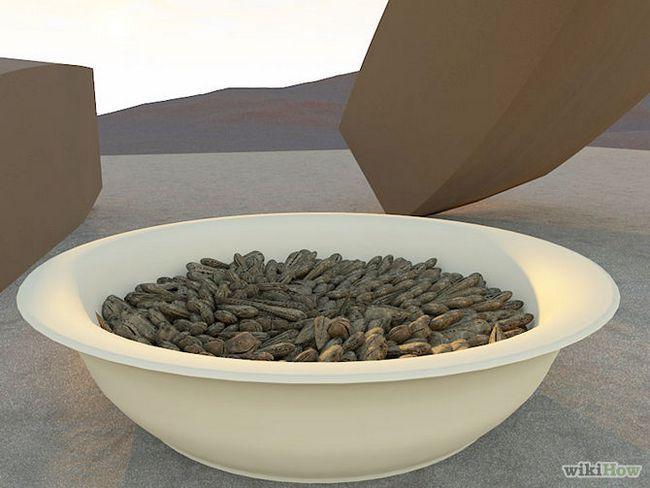 Зображення з назвою Harvest Sunflower Seeds Step 11