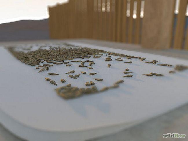 Зображення з назвою Harvest Sunflower Seeds Step 14