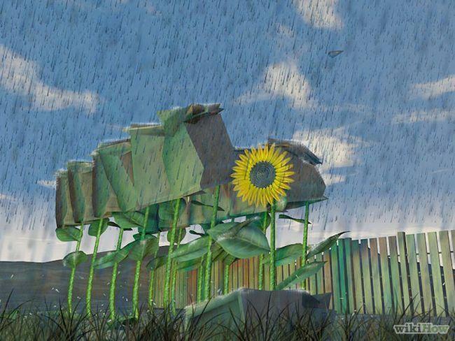 Зображення з назвою Harvest Sunflower Seeds Step 3