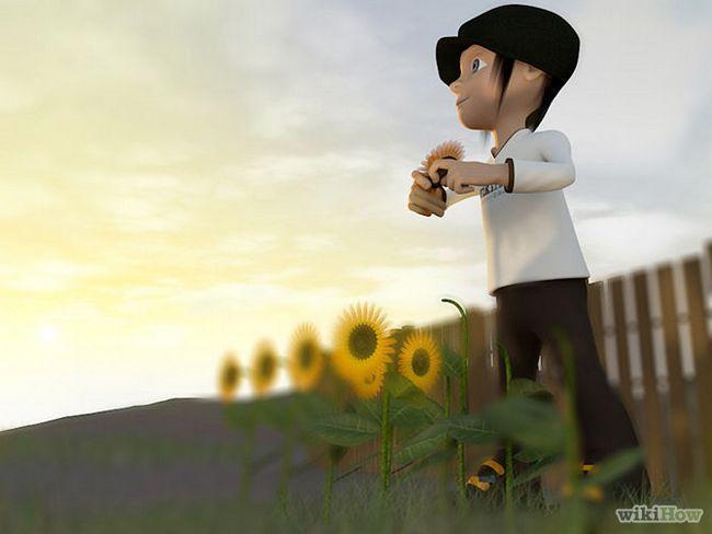 Зображення з назвою Harvest Sunflower Seeds Step 4
