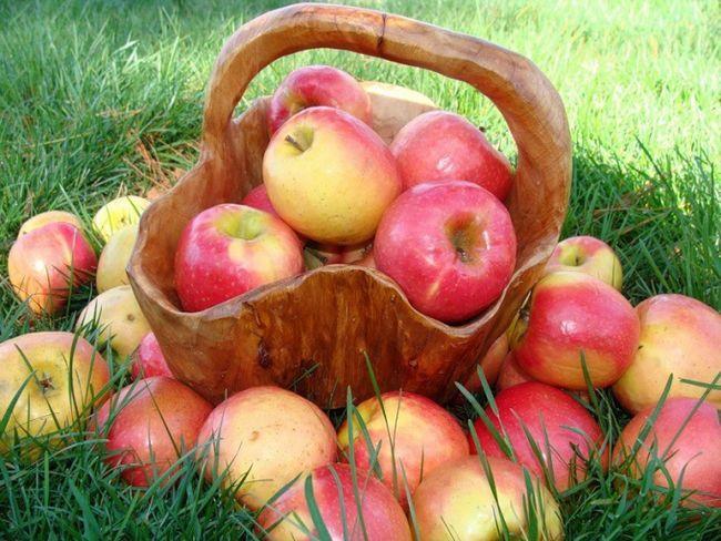 Як зібрати урожай з плодових дерев швидко