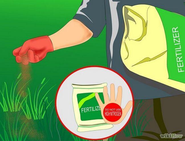 Зображення з назвою Get and Maintain a Healthy Lawn Step 5