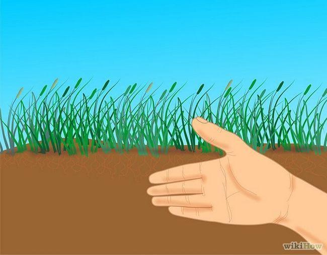 Зображення з назвою Get and Maintain a Healthy Lawn Step 6