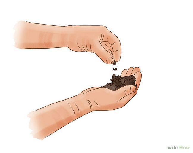 Зображення з назвою Care for Hostas Step 3