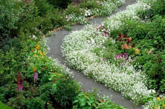 Доглянутий квітучий сад подібний твору мистецтва