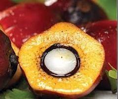 Пальмова олія: шкода чи користь? Використання в харчових продуктах