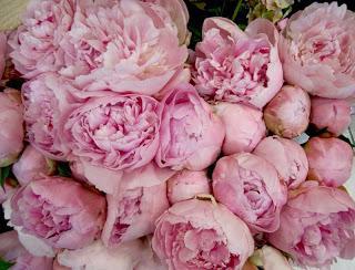 П`ять причин того, чому півонії не цвітуть