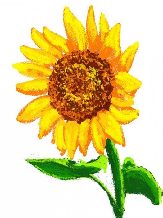 Творча майстерня: як намалювати соняшник
