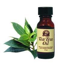 Ефірна олія чайного дерева для волосся: позбавляємося від лупи (застосування та відгуки)