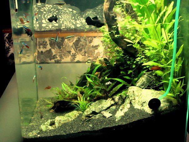 Аквадизайн - унікальний акваріум у вас вдома