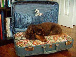 Будиночок для собаки з валізи